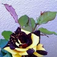 mariella960453's profile photo