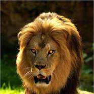 kamel76alger's profile photo