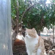 aliz58484's profile photo