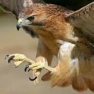 falconeye2022's profile photo