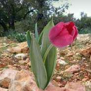 josephk376486's profile photo