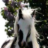 majedl909804's profile photo