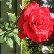 rosalias70762's profile photo