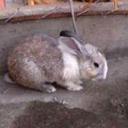 veroniquiti's profile photo