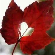 _wsam_alro7_'s profile photo