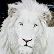 omarmanaseer1's profile photo