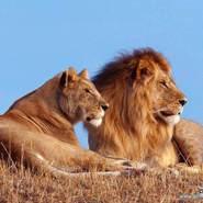 lion80_0's profile photo