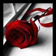 nassrnasser's profile photo