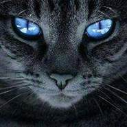 kamelbelghit's profile photo