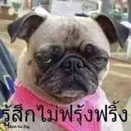 yurananyamchum's profile photo