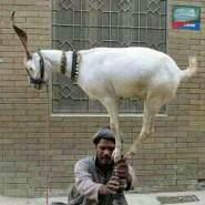 hassanmohamed_6's profile photo
