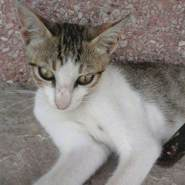 hasanbadi4's profile photo