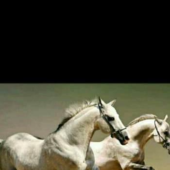 ahmeddarwish24_Ash Shariqah_Single_Male