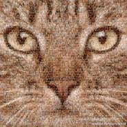 vin4ever's profile photo